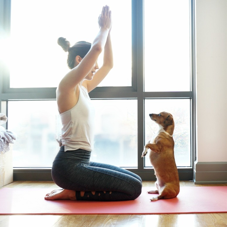 How To Practice Yoga With Your Dog - Headstands and Heels