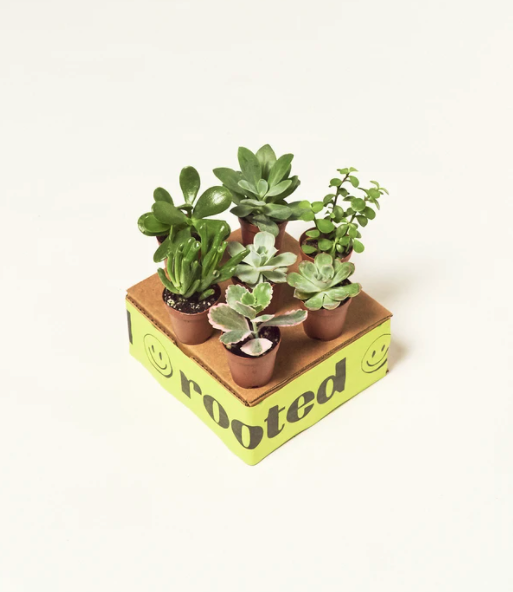 BABYPLANTBOX-MYSTERYLOW_1000x.png